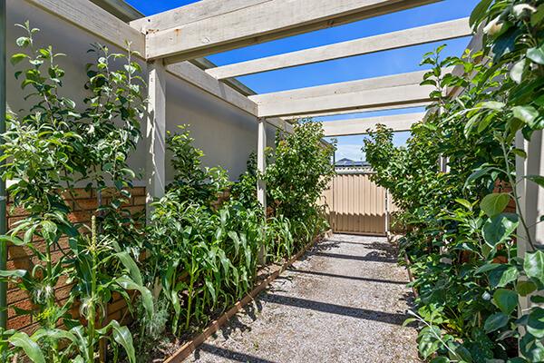 Clarenvale Village Veggie Garden